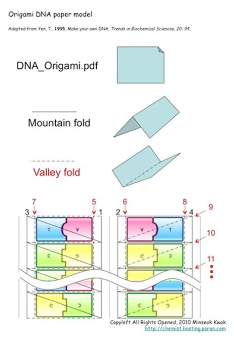 origami dna template origami dna paper model quotes