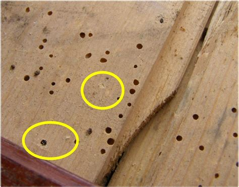 Woodworm In Antique Furniture by Treating Woodworm In Antique Furniture Antique Furniture