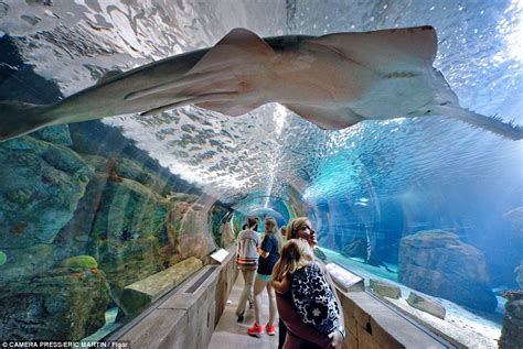 inside the mall of america rollercoasters sharks and even weddings daily mail