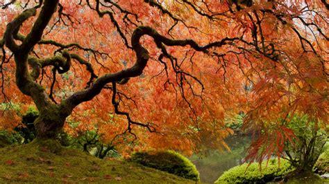 El Patios by Arce Japones En Jardiner 237 A