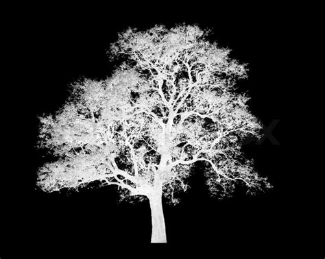 tree on black background lonely white tree graphic isolated on black background