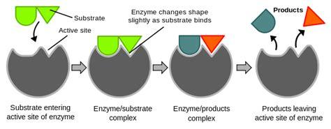 principles of biochemistry enzymes wikibooks open books