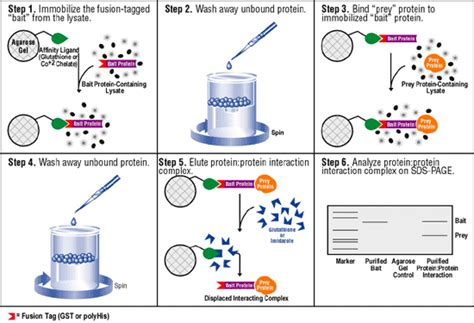 gst agarose biotechnology gst and his tag protein