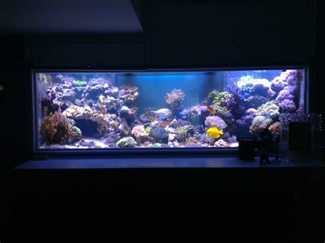 led light reviews orphek led review aquarium led lighting