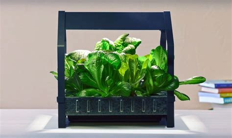hydroponic vegetable garden kit ikea launches indoor garden that can grow food all year