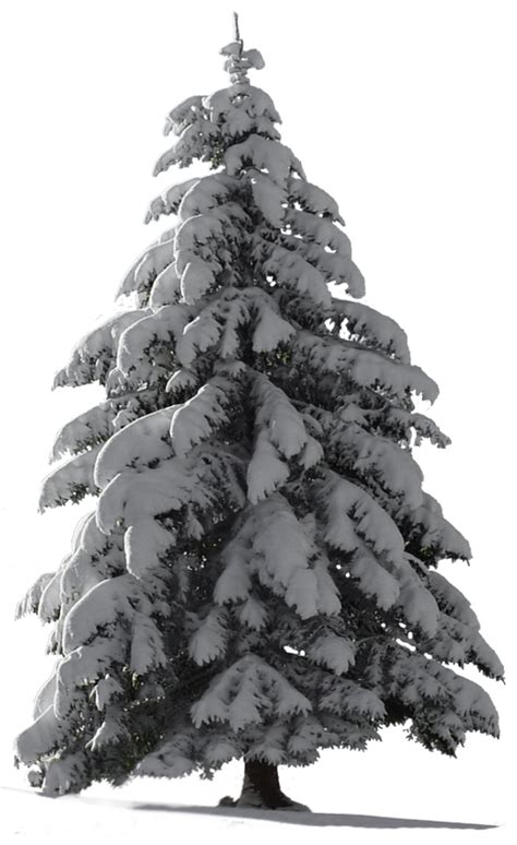 tree with snow tree snow for my watcher stock by astoko on