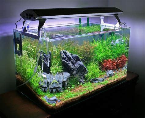 d 233 buter avec un aquarium d eau douce choix du bac type de filtration et support animogen