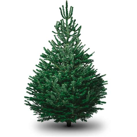 www christmastrees non drop 3 9ft trees uk