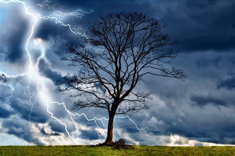 lighting trees clipart lightning tree