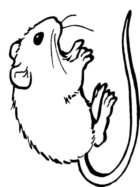 gerbil coloring page animals town animals color sheet