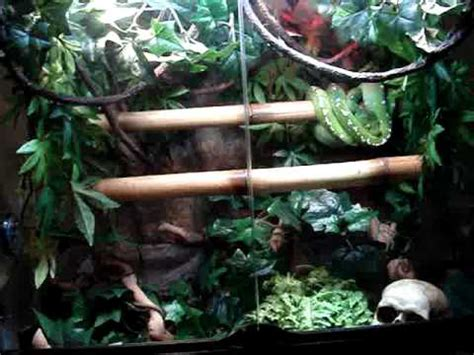 tree setup green tree python setup
