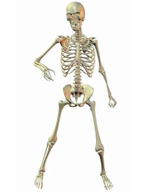 a skeleton skeleton 3d models and 3d software by daz 3d