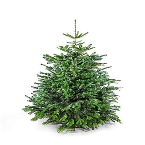 weihnachtsbaum tanne weihnachtsbaum 150 cm der charmante leander meine tanne