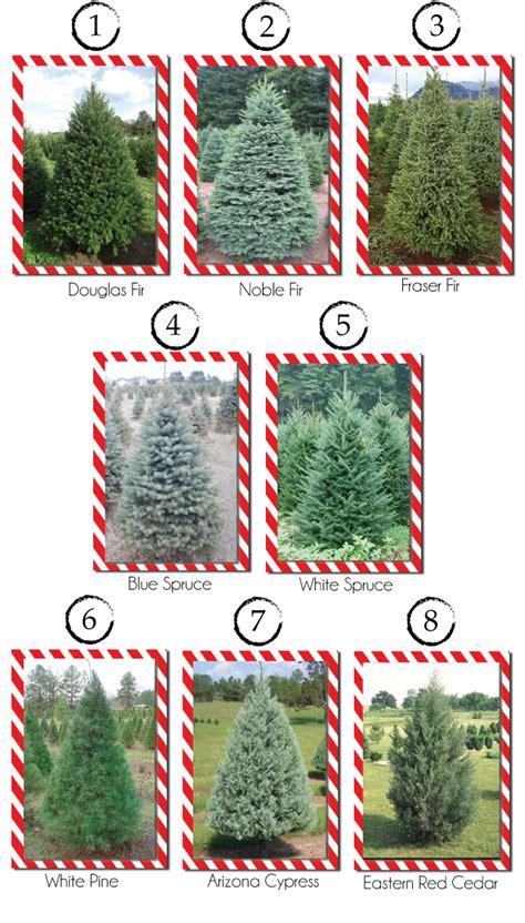 popular types of trees type tree lizardmedia co