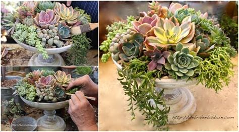 succulent planter ideas amazing interior design new post has been published on