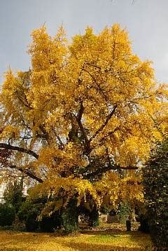 Im Garten Wuchs Der Baum by Http Baum Natur Eu