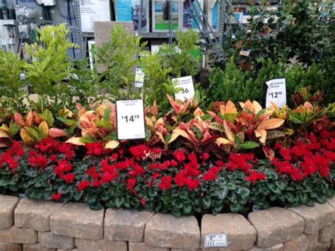 lowes garden center flowers 17 best ideas about lowe s garden center on