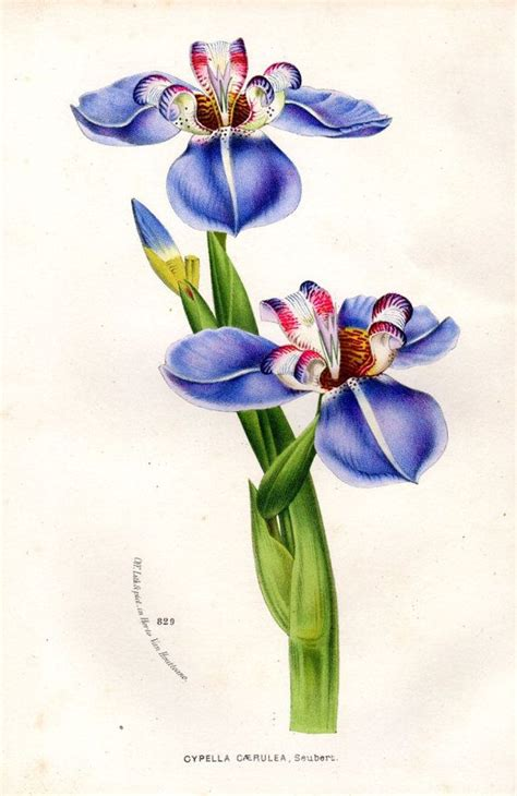 578 best images about botanical art on pinterest