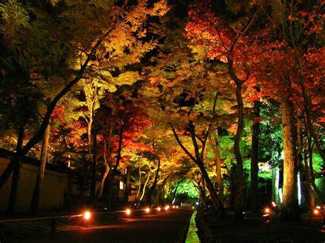 11 stunning photos of landscape lighting pegasus lighting