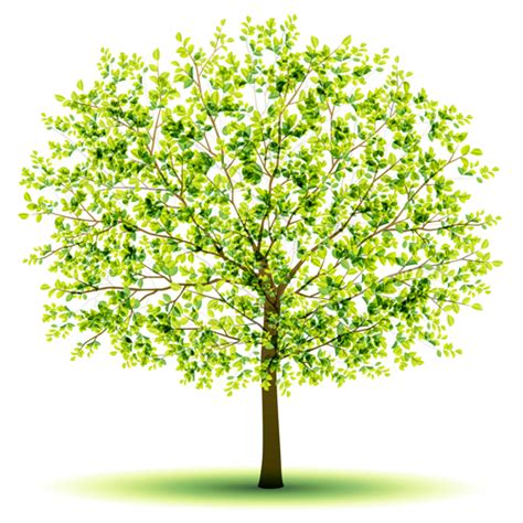 design for tree creative green tree design vector graphics 03 vector