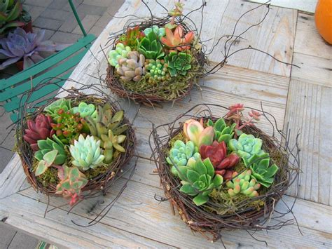 planters for succulents the best 28 images of planters for succulents creative