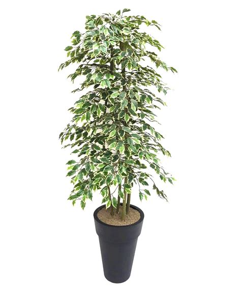 artificial variegated ficus tree and handbuilt trees from