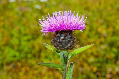 flower garden seeds what s in your scotland flower seed mix grow