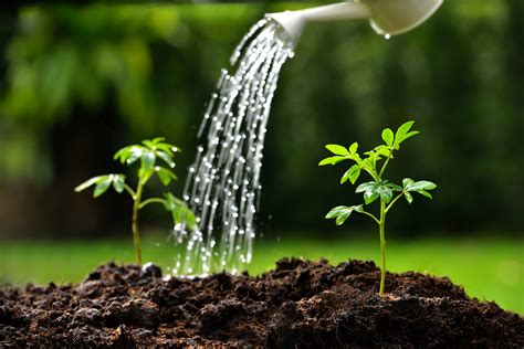 water for plants mitigating the effects of climate change on water scarcity