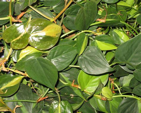 plantes d int 233 rieur 3 petites mailles