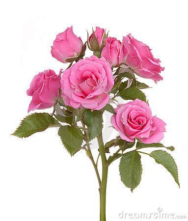 rosary from flowers fleur de de fleurs de roses photo libre de