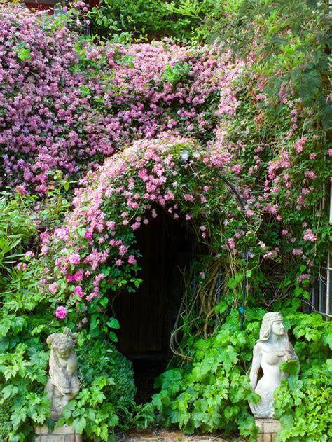 Garden Arch Vines 15 Climbing Vines For Lattice Trellis Or Pergola