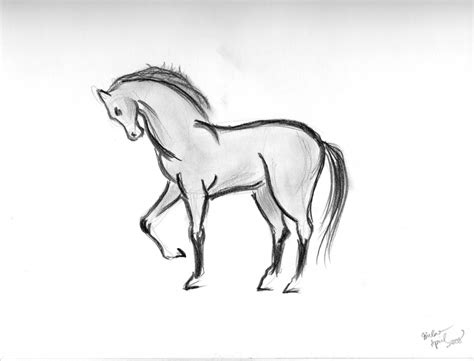 animals easy pencil sketches animals easy simple pencil drawings of