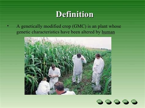 Genetically Modified Definition Crops genetic modified crops