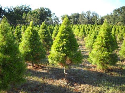 tree farms nearby tree farms in florida