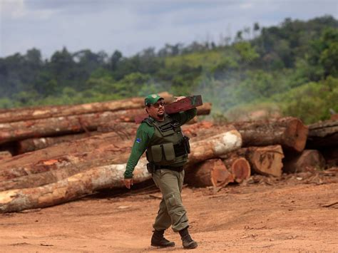woodworking resources here s how much the world s forests could vanish by 2050