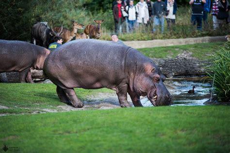 Der Zoologische Garten Berlin by Zoo Berlin Zoologischer Garten