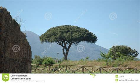 trees in italy italian tree royalty free stock photo image 125635