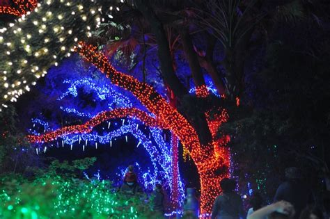 lights at the houston zoo houston zoo lights beat the crowds at houston s popular