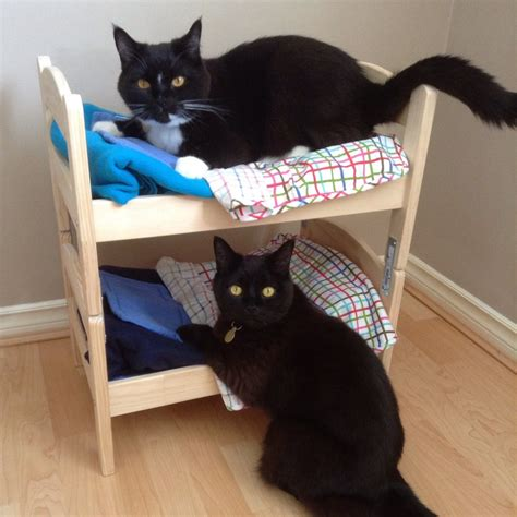 how to make bunk bed how to make a cat bunk bed for your kitties