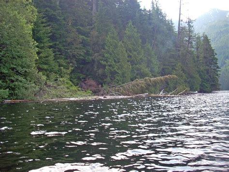 lake tree farm fly fishing from snoqualmie calligan lake hancock tree farm