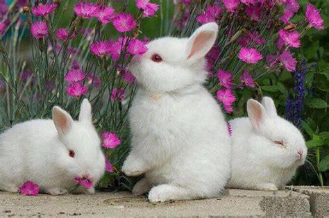 Bunnies And Flowers Pixdaus