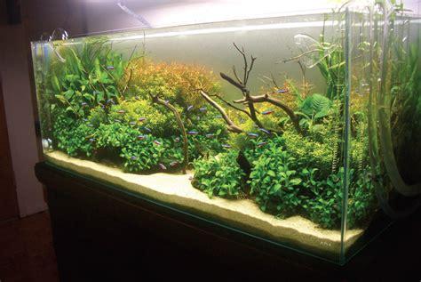 aquascape cupang hias aquascape bisa hilangkan stress ikan hias cupang