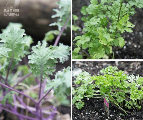 my vegetable garden vegetable garden salad fresh from your garden my stay at