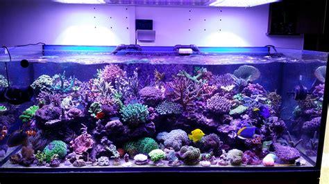 aquarium led lights this tank is truly one beautiful orphek