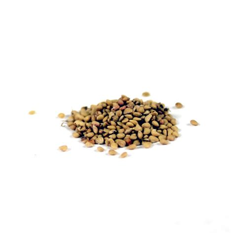 with seed strawberry seeds