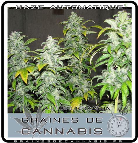comment commencer a planter du cannabis