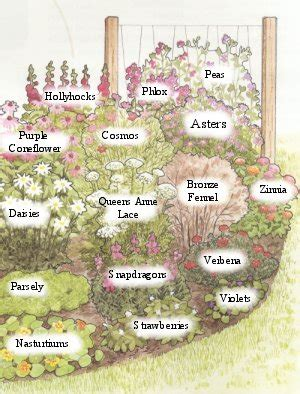 butterfly garden layout butterfly garden plans