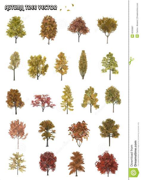 tree shapes tree shapes royalty free stock photography image 6530887