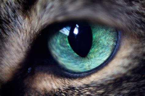 cat eye cat eye flickr photo