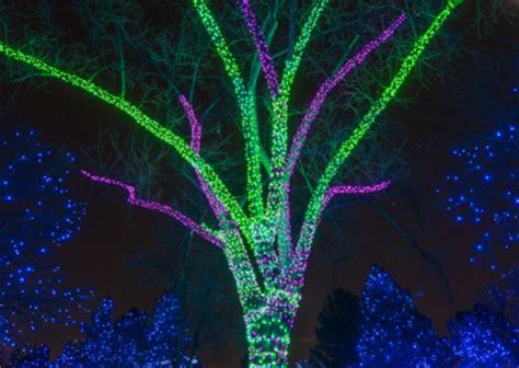 denver zoo zoo lights zoo lights at the denver zoo photos
